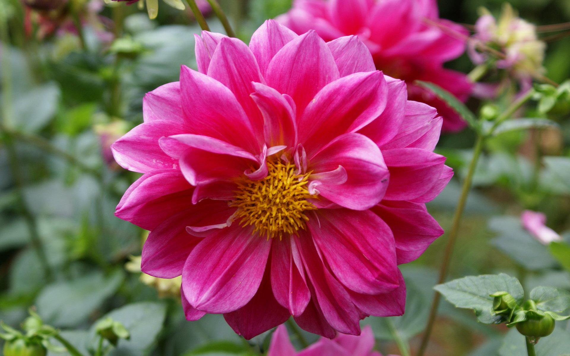 Fondos flores fotos flores mas bellas fondos widescreen - Flores tropicales fotos ...