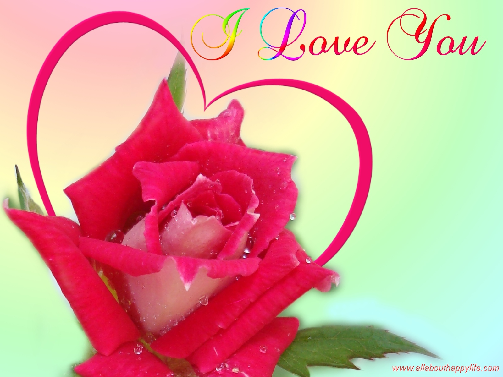 knumathise red rose i love you wallpaper images
