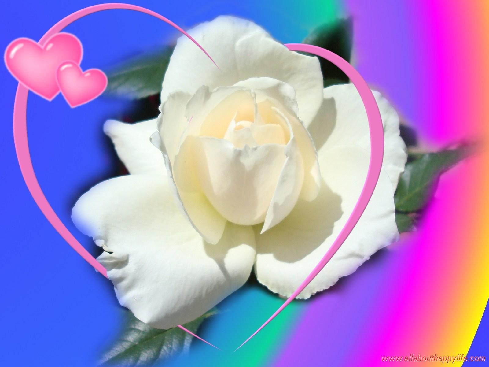 Fonds d'écran St Valentin - amour, coeurs, anges et fleurs