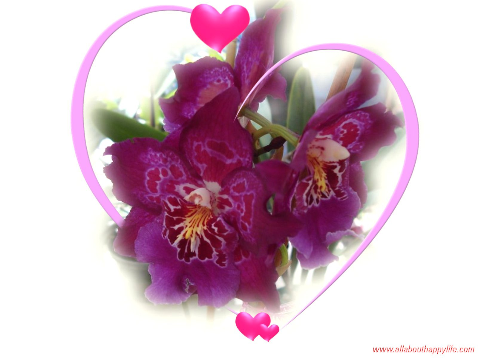 Fonds d 39 cran st valentin amour coeurs anges et fleurs for Fond ecran amour