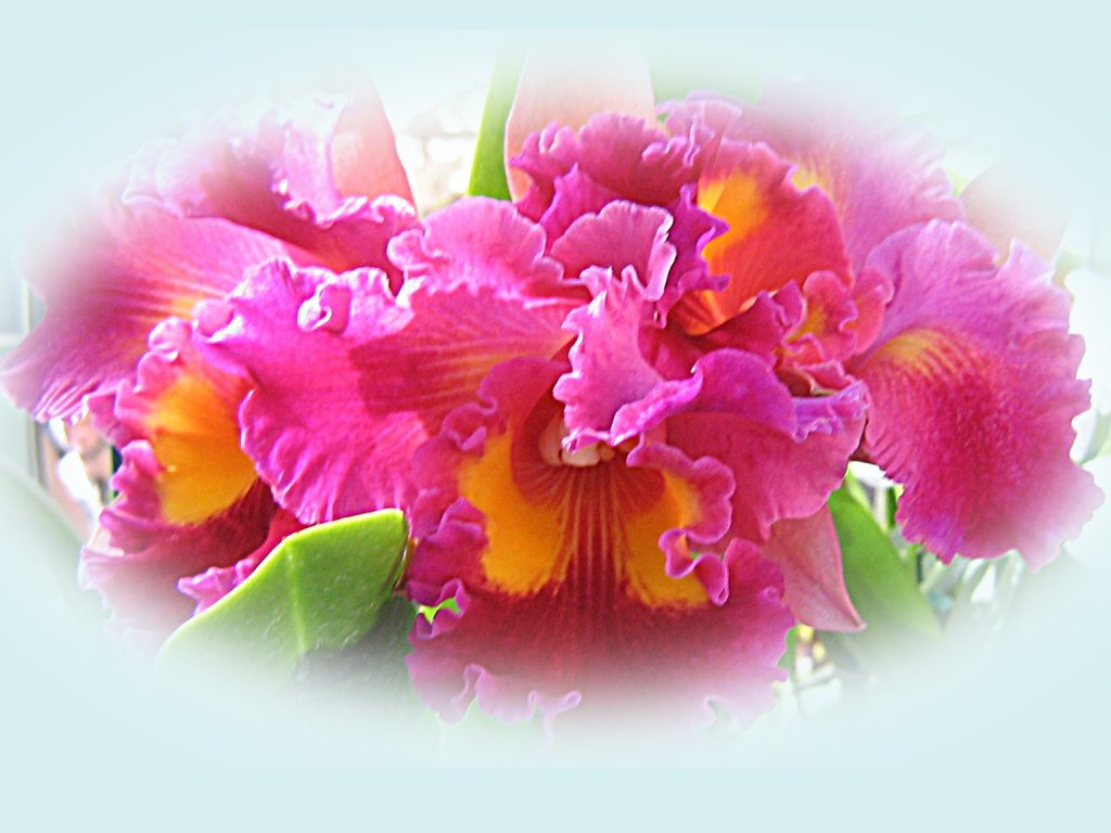 Beautiful Orchids Wallpapers
