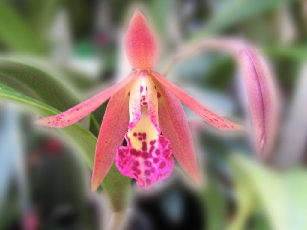 Beautiful Orchid Flower Wallpaper