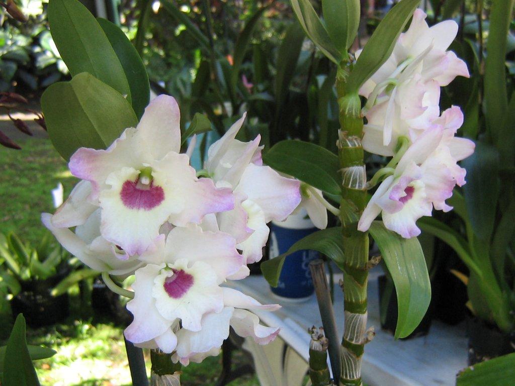 Cosas Para Photoscape Flores Y Plantas Arboles Ps: Imagenes Bonitas Con Flores Y Plantas 3ª Parte CERRADO
