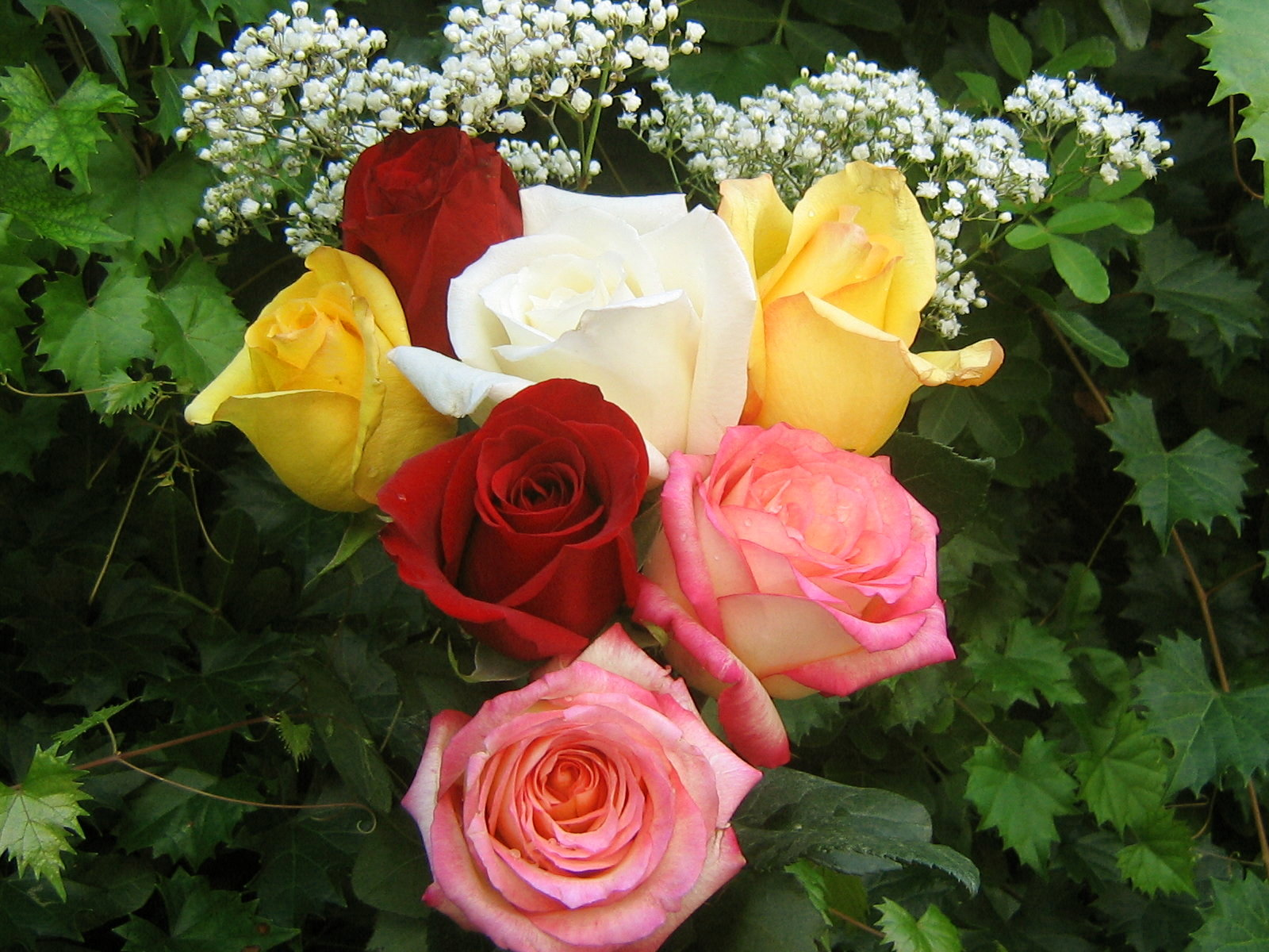 Roses bouquets wallpapers for Images of bouquets of roses