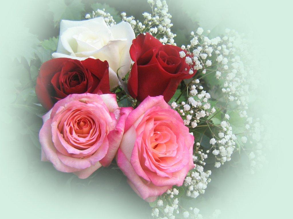 Rosas hermosas fondos de escritorio - Ramos de flores hermosas ...
