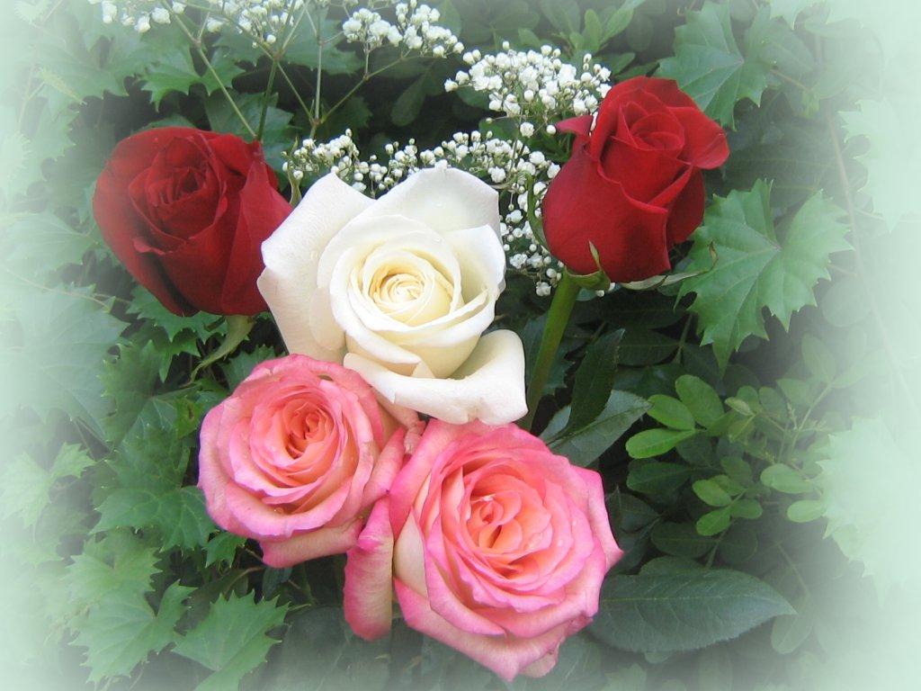 Bouquet de roses fonds d 39 cran gratuit 1024 par 768 - Image bouquet de roses gratuit ...