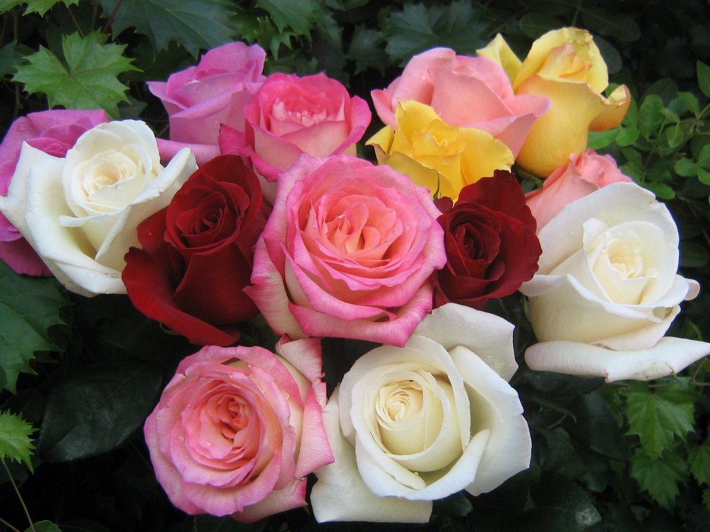 Bouquet de roses fonds d 39 cran gratuit 1024 par 768 for Bouquet de fleurs 8 mars