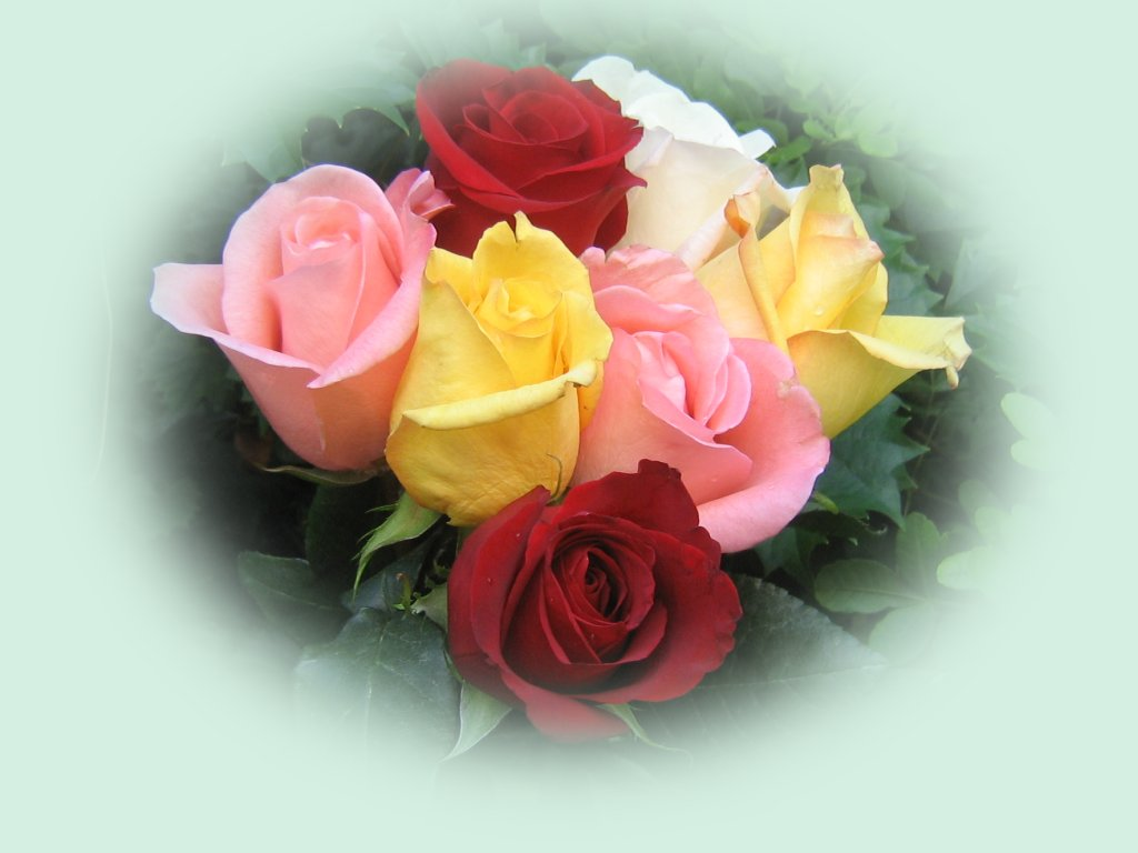Rosas hermosas fondos de escritorio - Rosas rosas hermosas ...