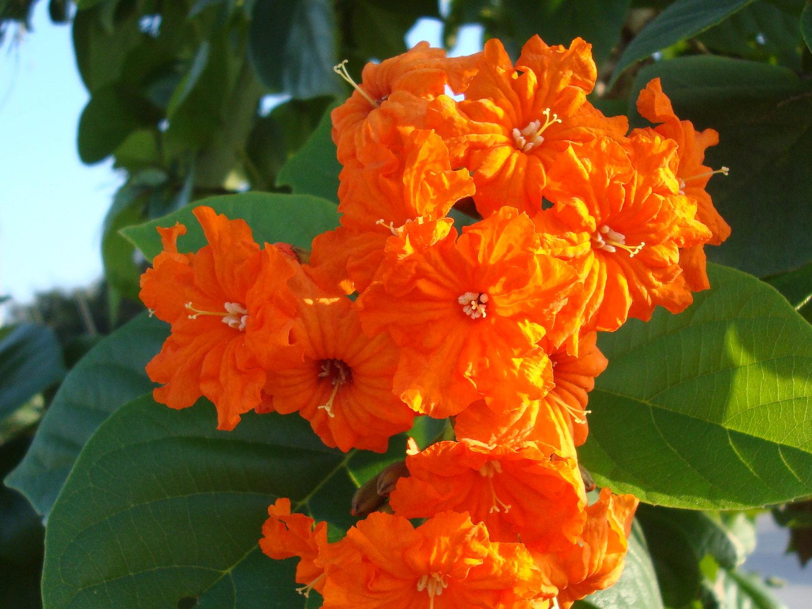 Primavera Flores de Primavera fondos de escritorio