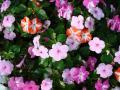 Весенний сад