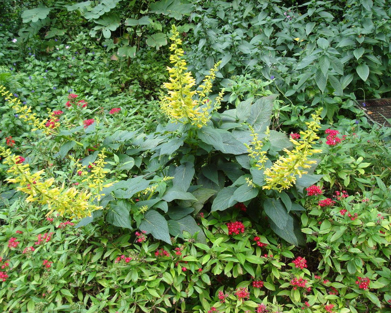 Jardines ex ticos fondos de escritorio for Imagenes de jardines exoticos