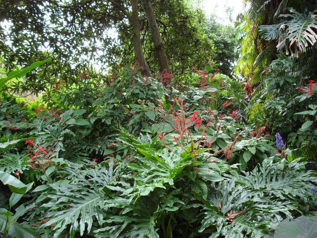 tropical garden wallpapers pictures of tropical plants