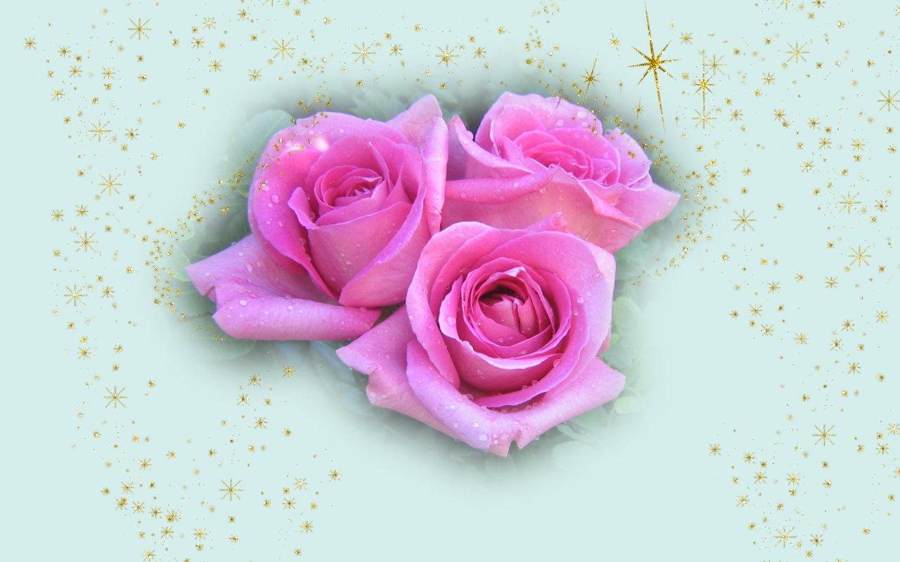christmas_pink_roses_3491.jpg