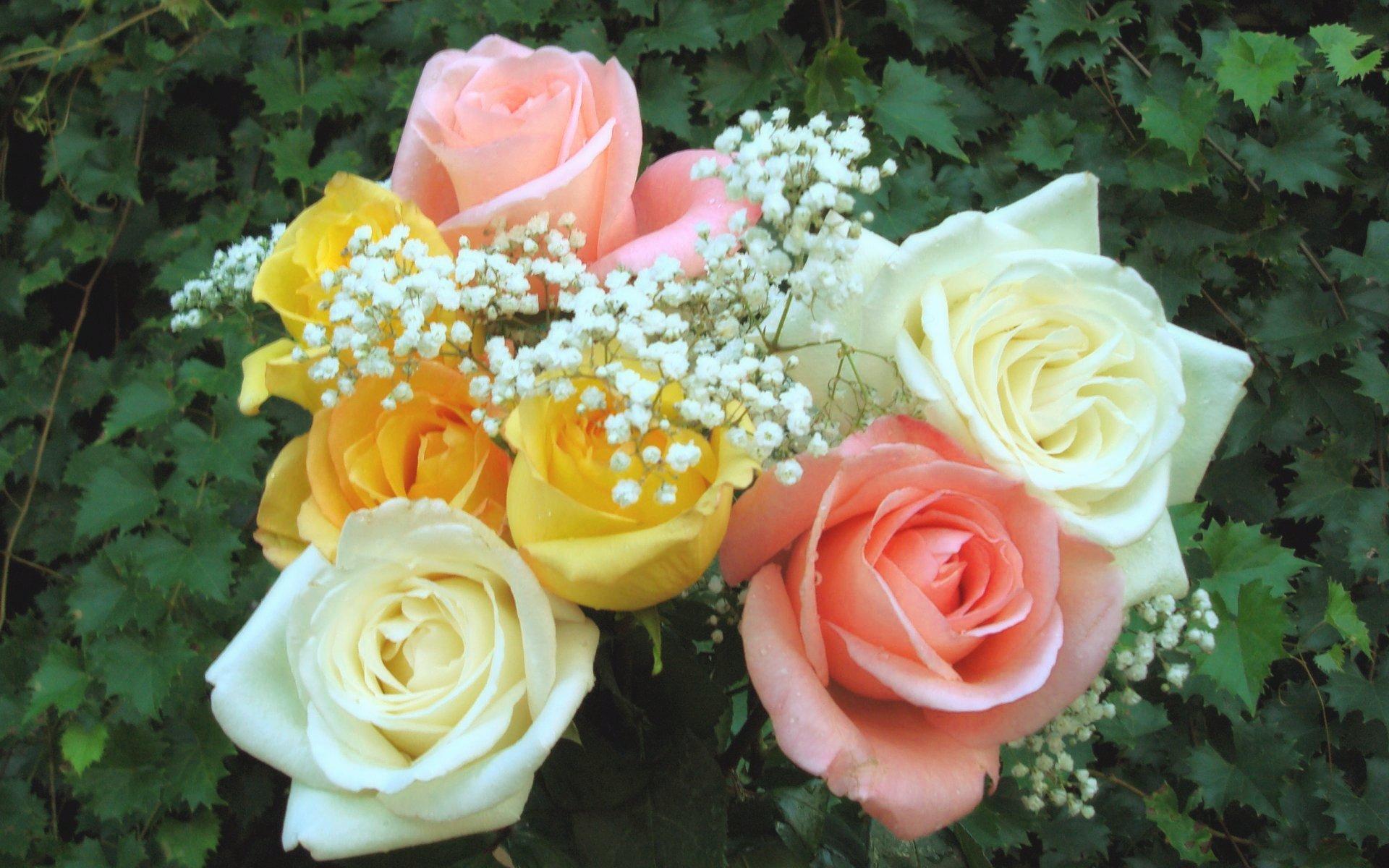 Самые красивые цветы букеты роз фото