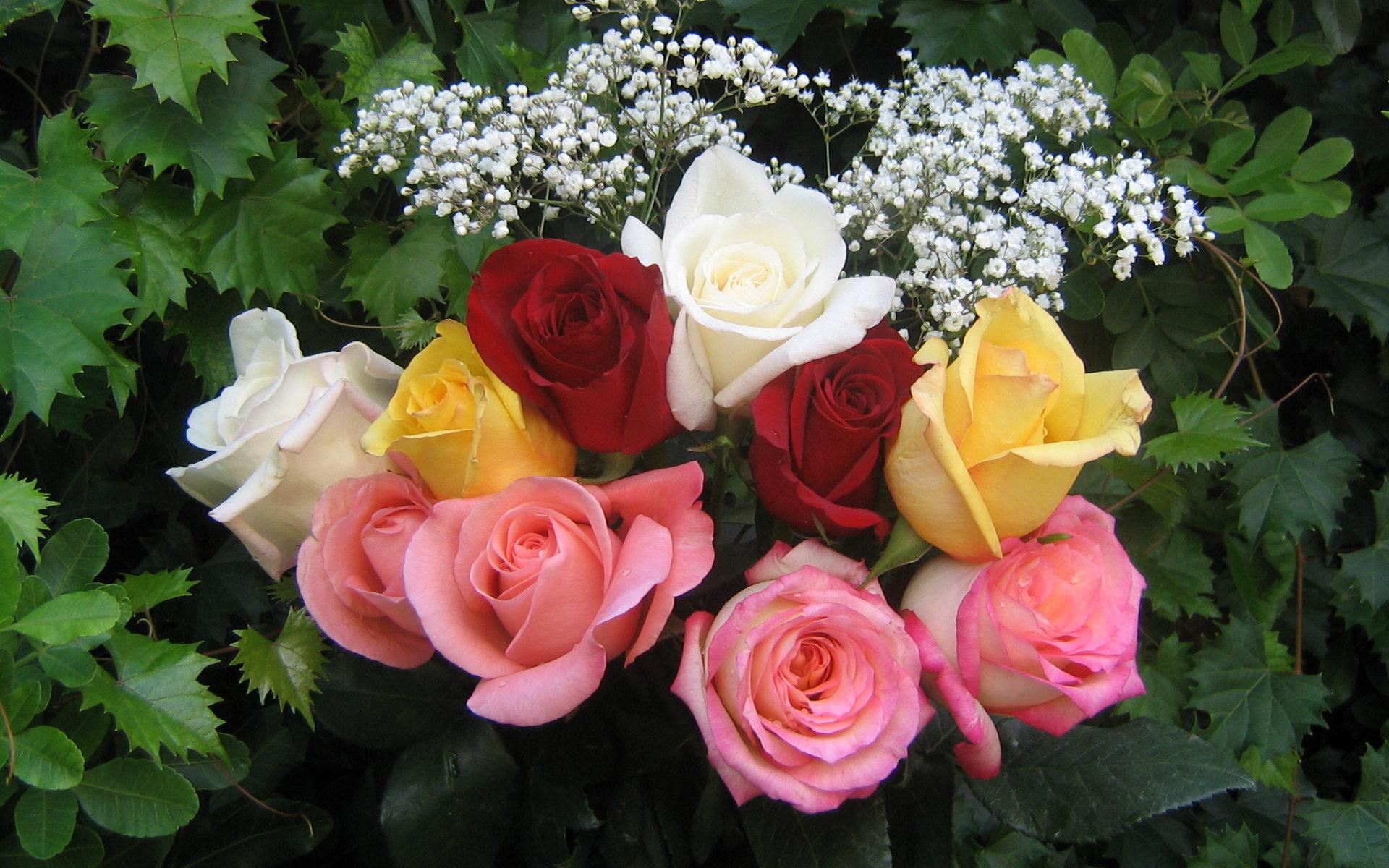 Десктоп тапети с красиви рози