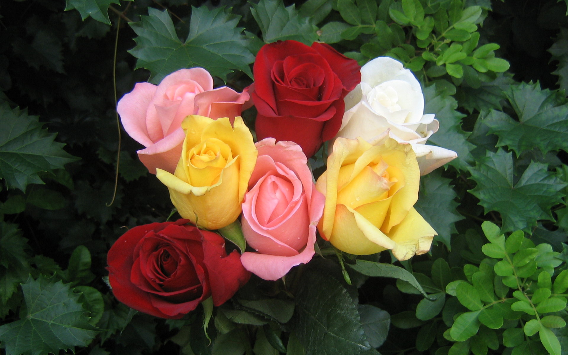 colorful rose bouquet widescreen wallpapers
