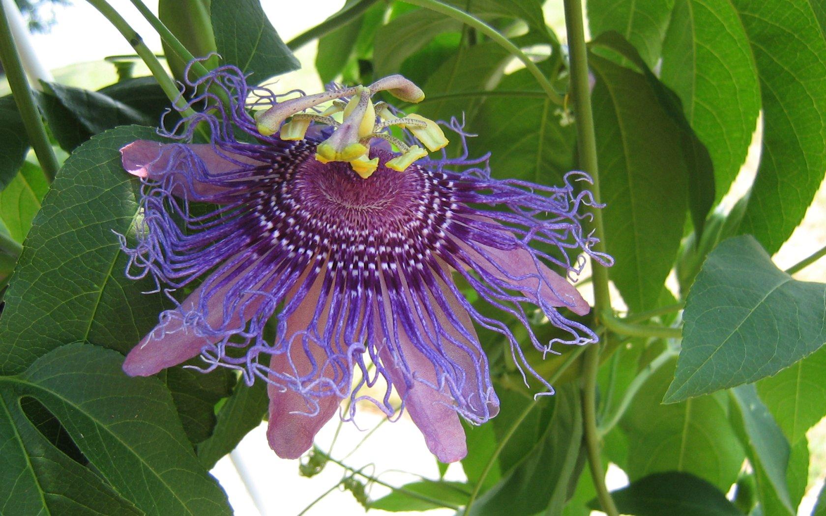 Фото экзотических цветов с названиями цвета