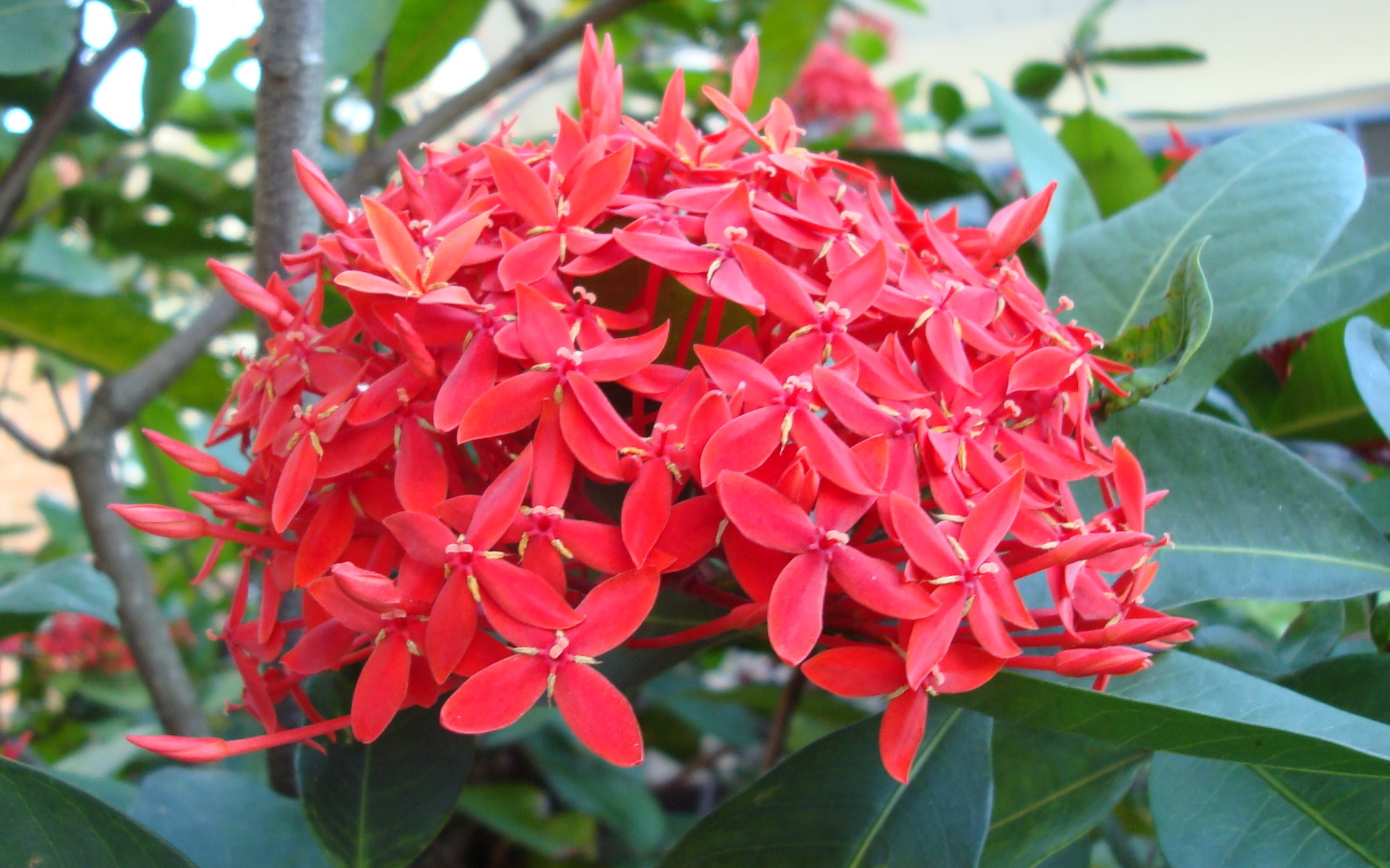 Tropical Plants With Red Flowers