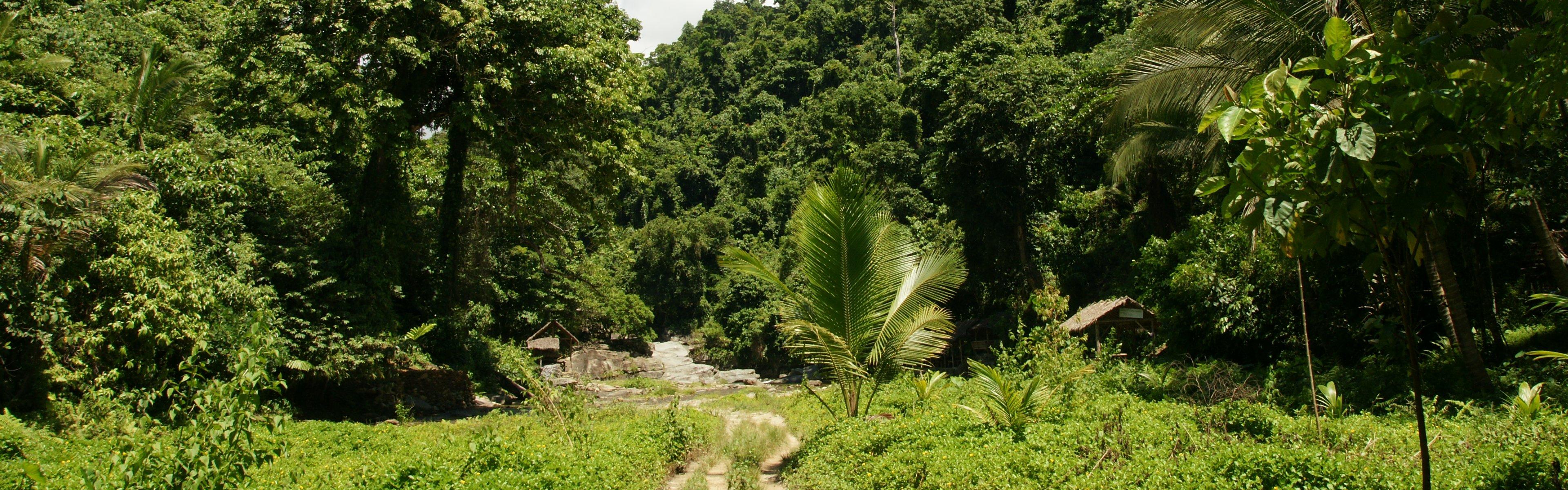 Hintergrundbilder kostenlos urwald