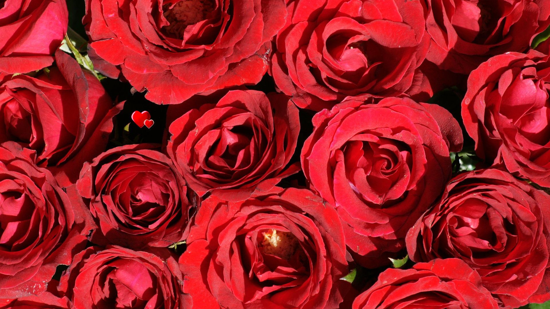 Rose wallpaper beautiful roses - Beautiful red roses wallpapers desktop ...