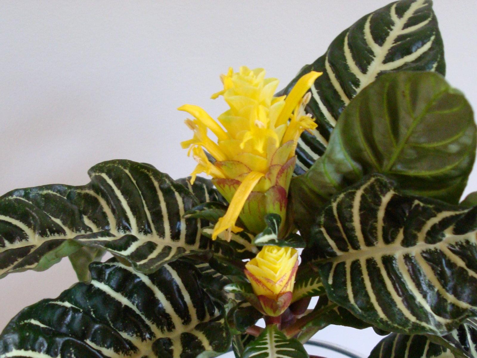 Flores bell simas y ex ticas fondos de escritorio - Piante grasse da interno poca luce ...
